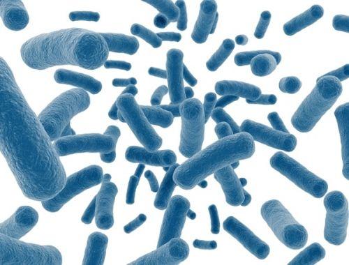 probiotic hệ vi khuẩn đường ruột