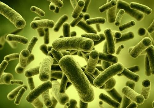 Bổ sung lợi khuẩn