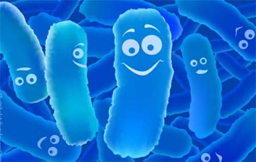 Men vi sinh Himita có chứa hỗn hợp lợi khuẩn tốt cho đường ruột