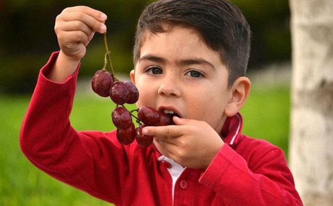 trẻ ăn nho