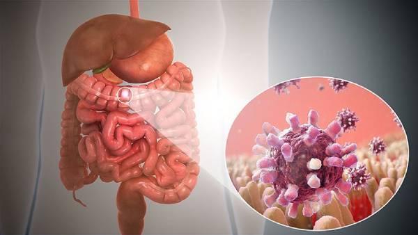 vi khuẩn shigella